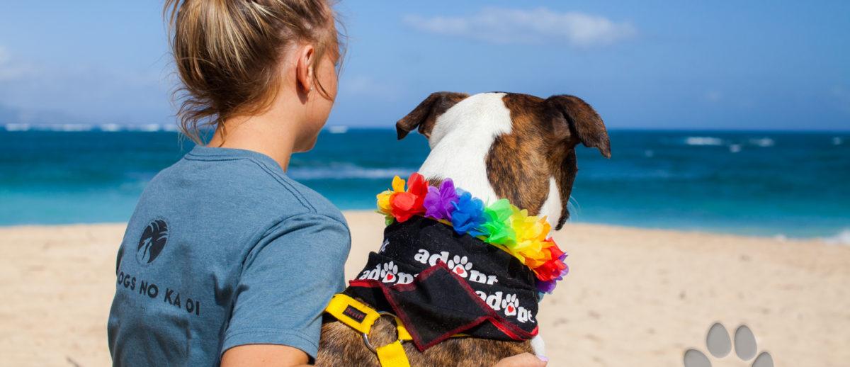 Maui Humane Society Beach Buddies Program