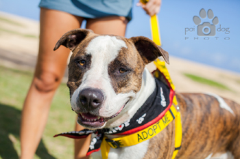 Maui Humane Society Beach Buddies Program