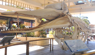 Whale Skeleton at Whalers Village